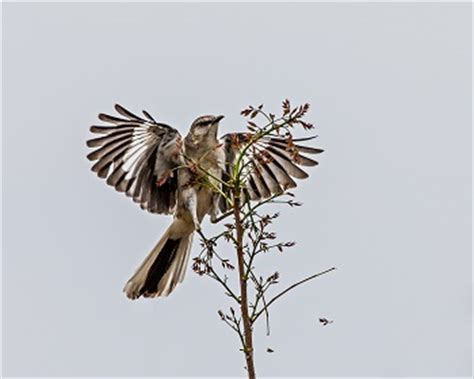 Good and evil to kill a mockingbird essay